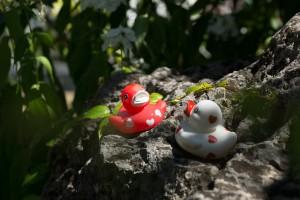 ducks-368472_1280