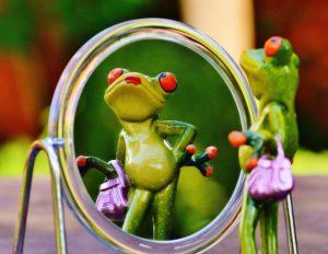 frog-1499068_1920